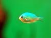 Aquariumd2s