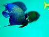Aquariumj1
