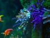 Aquariumm2