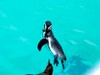 Penguinc1_2