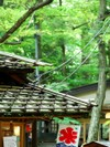 Roofa2