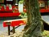 Tree_and_bencha1w