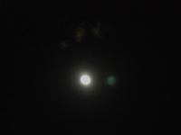 Moong2w_3