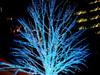 Bluetreea1w_2