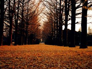 Street_treesa7w