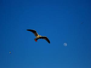 Birdb1w_2
