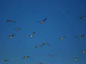 Birdf2w_2