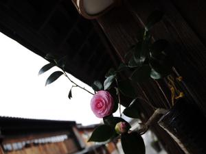 Tsubakia1w_5