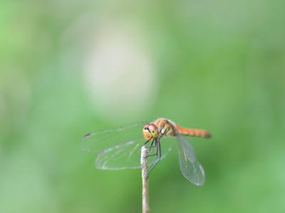 Adragonflyb03w