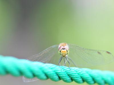 Adragonflyd01w