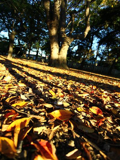 Fallen_leaves01w