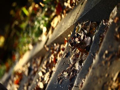 Fallen_leaves02w