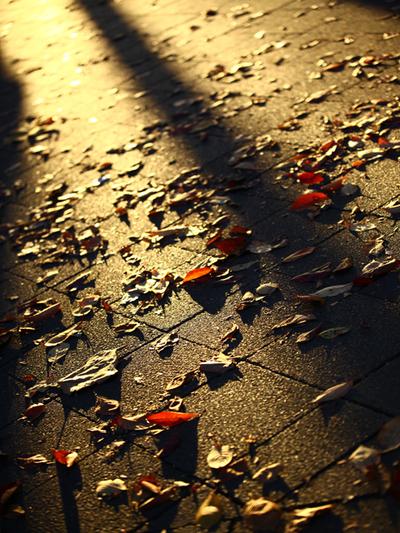 Fallen_leaves03w
