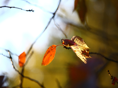 Dead_leaf_that_flutters_in_the_sky0