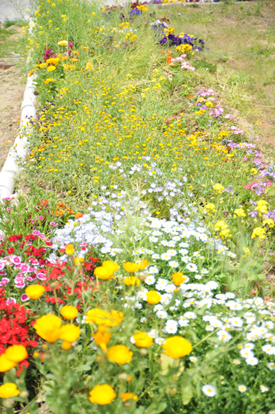 Flower_garden_in_roadside01w
