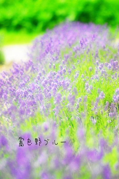 Furanoblue001w