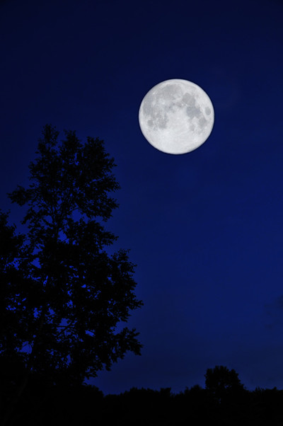 The_blue_moon_in_woods2_6
