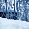 A_snowy_forestb3w