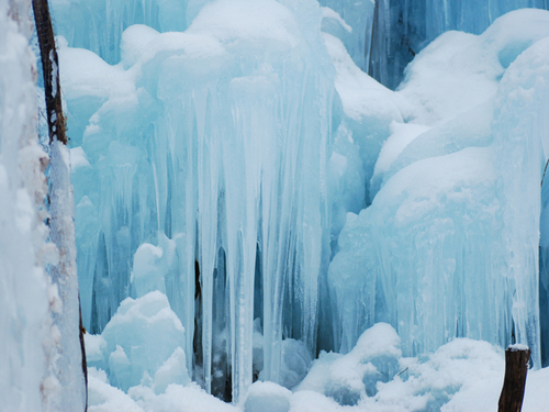 白川郷・飛騨高山: 氷点下の森