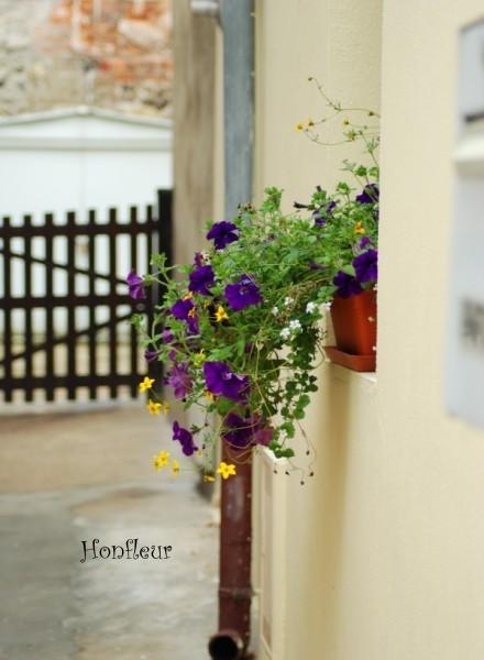 Honfleurruellea1w_2