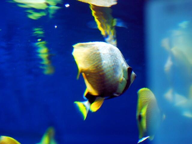 Aquariuma1
