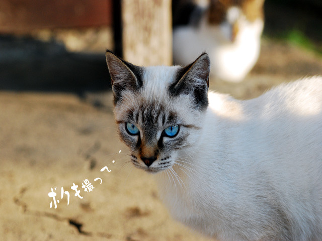 Catb1w_2