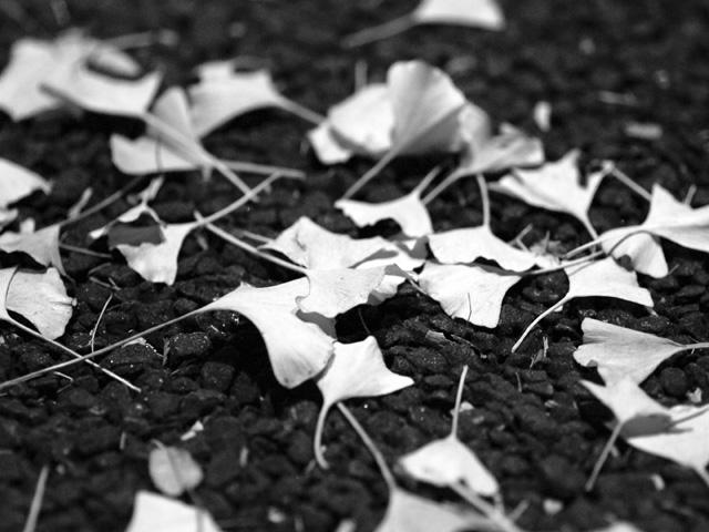 Fallen_leafa2wmono