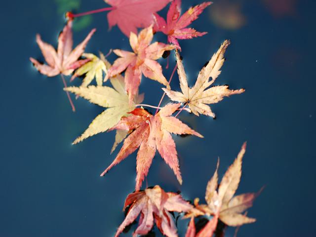 Autumnal_leavesb2w