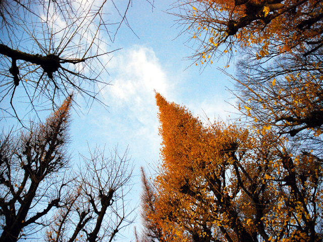 Street_treesj2w