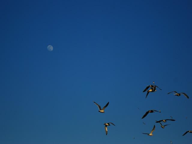 Birdb2w