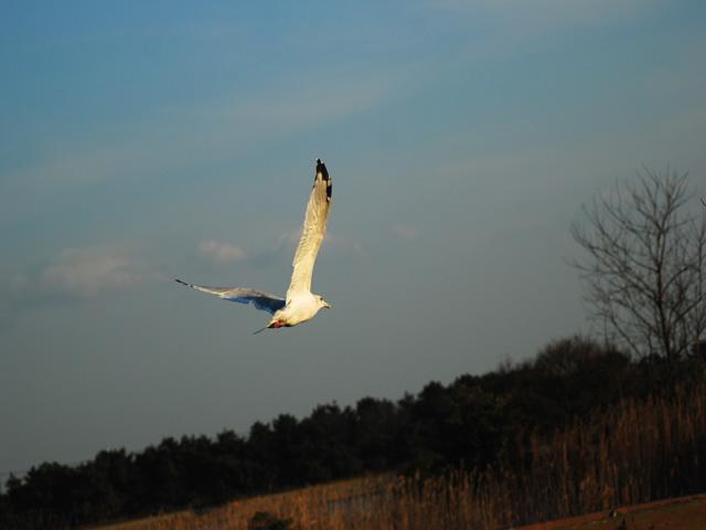 Birdd1w_3