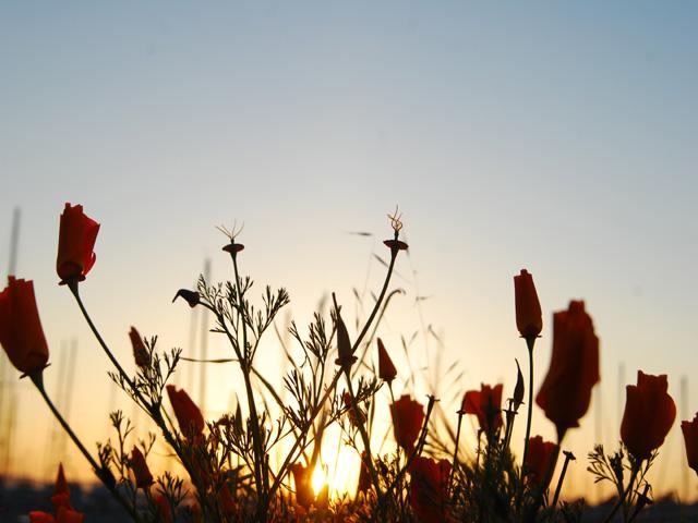 Flowera2w