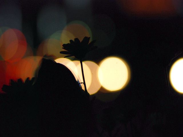 Silhouettea2w