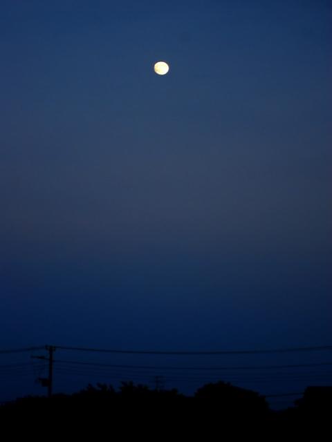 Moondd1w