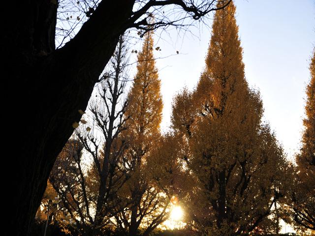 Street_treesk1w