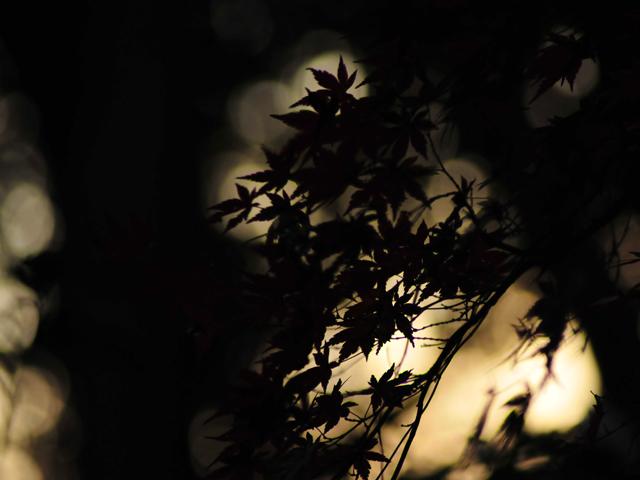 A_silhouettea1w_2