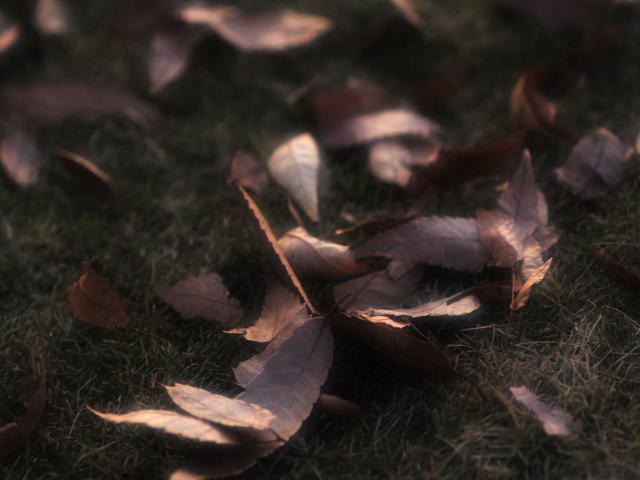 Fallen_leafm1w