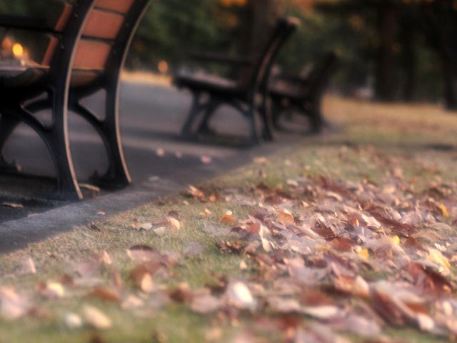 Fallen_leafn1w